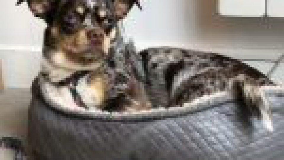 Enlevé à Paris, son chien est retrouvé à Cannes